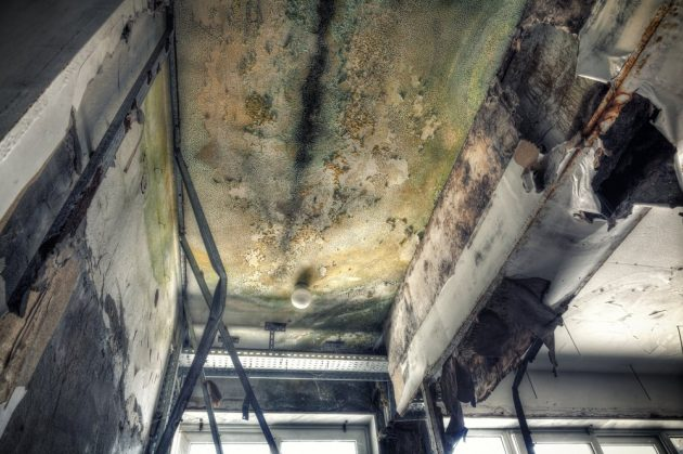Dealing with Mold Growth in Oahu, HI