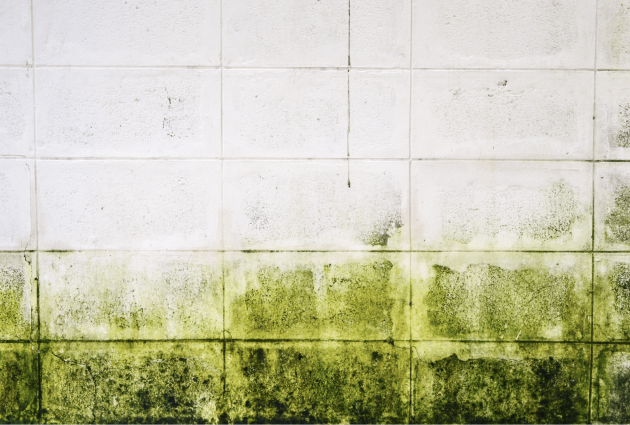 Is Mold Growth a Problem in Hawaii?