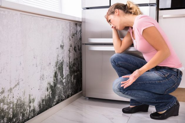 Is it mold or mildew? Learn how to spot the difference